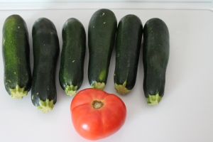 My garden Zucchini!