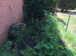 My garden 20015