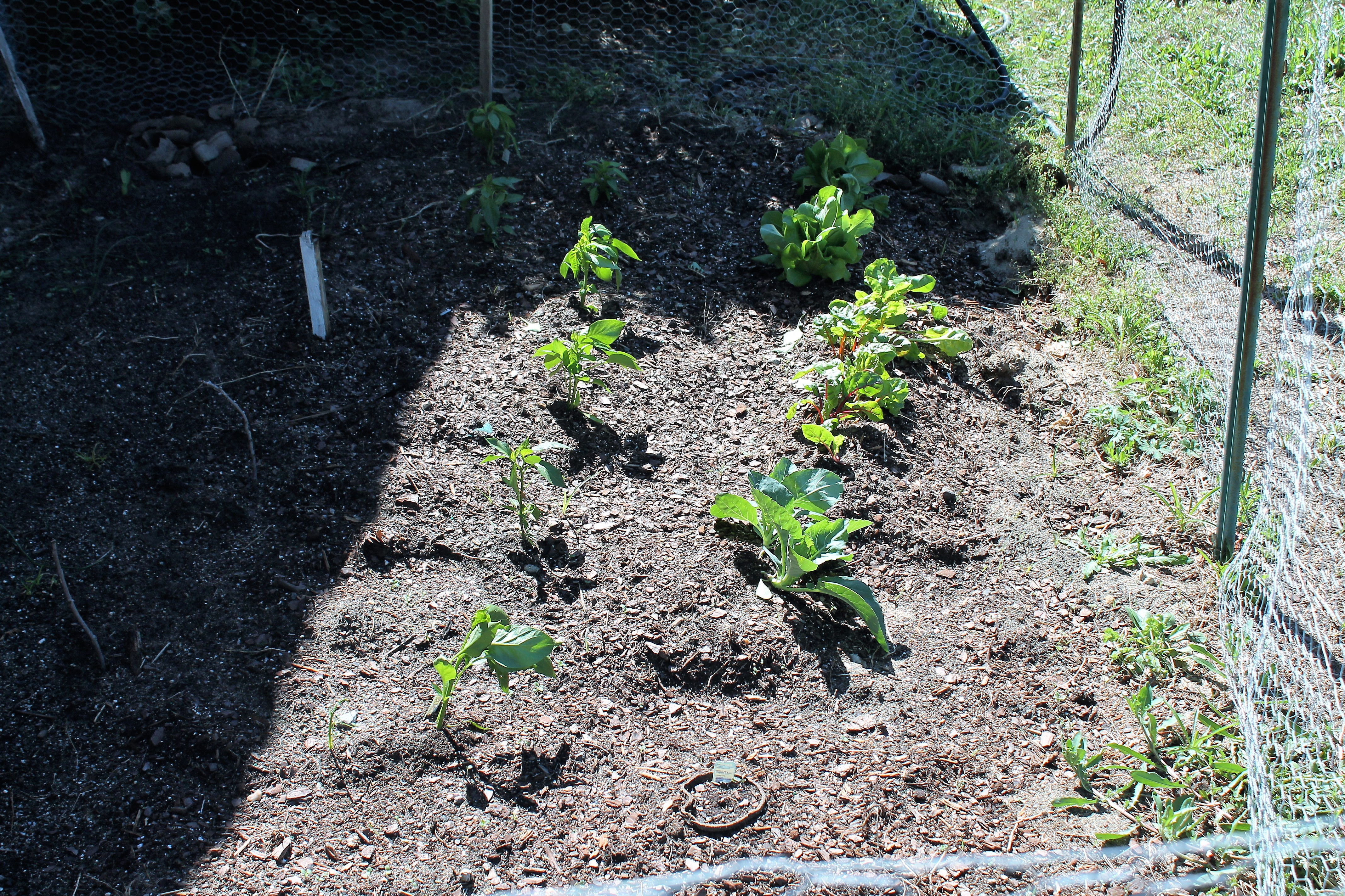 veg clippings long are soil yard grass gardening garden of crop from your vegetable cover a mulch with you ccesuffolkligardening and cce adding shredded my damaging leaves megs reduced has rototilling suffolk