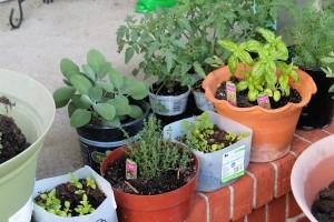 My porch herbs